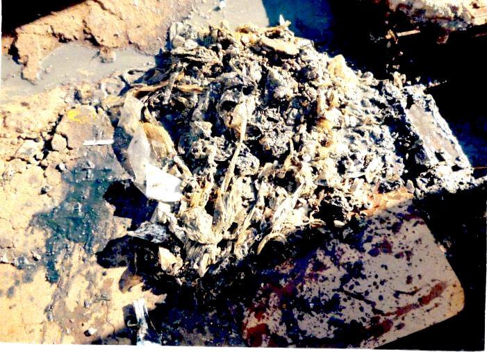 SAAE retira meia tonelada de resíduos do esgoto por mês